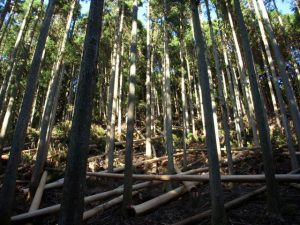 pp_timber-0001-640px