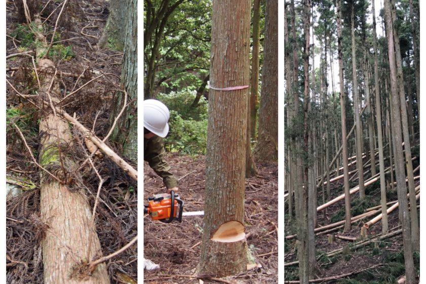木こり体験の視察。